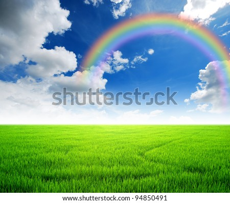 Rice field green grass blue sky cloud cloudy landscape background yellow rainbow - stock photo