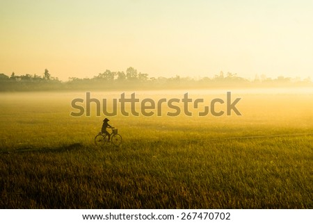 Rice field in the early morning fog, Hanoi, Vietnam - stock photo