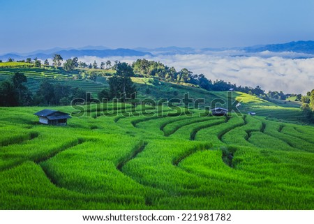Rice field terraces in Thailand