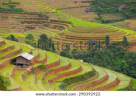 Rice field terraces scenic with hill tribe home , Mu Cang Chai district, Yen Bai province, Vietnam