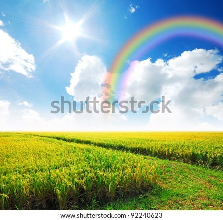 Rice field way on the green field background cloud cloudy rainbow - stock photo