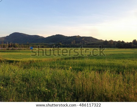 Rice field with mountain.