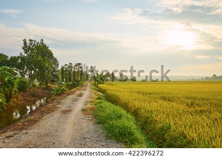 Rice field with road in sunrise time