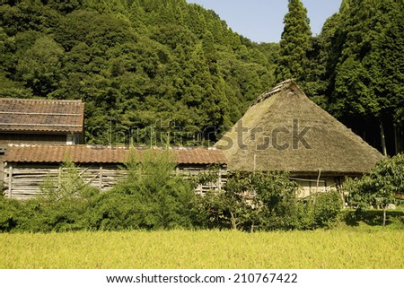 Rice Fields And A House With A Thatched Roof