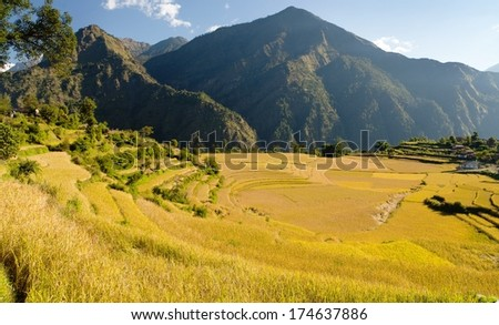 rice fields and village in Nepal - stock photo