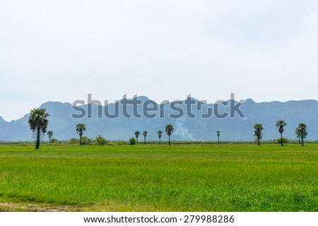 Rice fields at  National Park Prachuap Khiri Khan Province