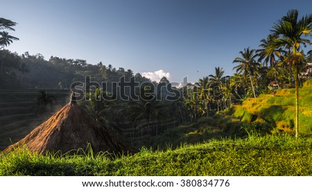 Rice fields at sunrise near the town of Ubud