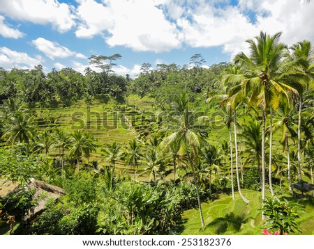 Rice fields at Ubud village, Bali, Indonesia