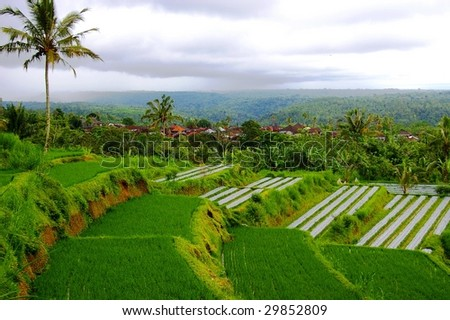 Rice fields close to the village of Pelaga. This scenic area is fast becoming a new tourist destination in Bali. Located on the Northern tip of Badung regency, Bali, Indonesia.