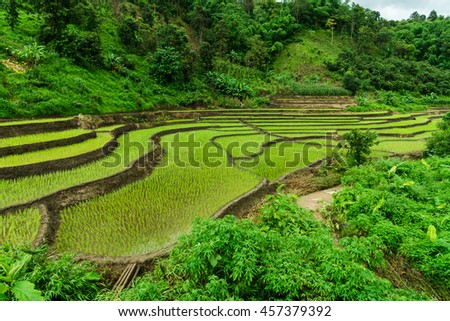 Rice fields in the mountain