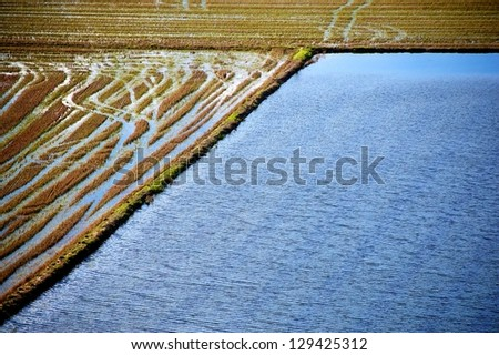 Rice fields in winter in Portugal, Europe - stock photo