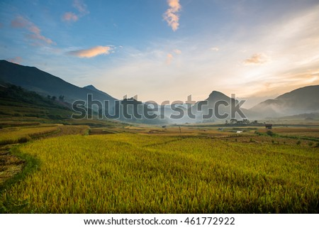 Rice fields on terrace in rainy season at MuCangChai, Yen Bai, Vietnam. Rice fields prepare for transplant at Northwest Vietnam