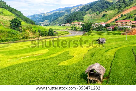 Rice fields on terraced at SAPA, Lao Cai, Vietnam