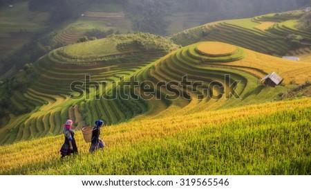 Rice fields on terraced in rainny season at Mu cang chai,  Vietnam. Rice fields prepare for transplant at Northwest Vietnam - stock photo