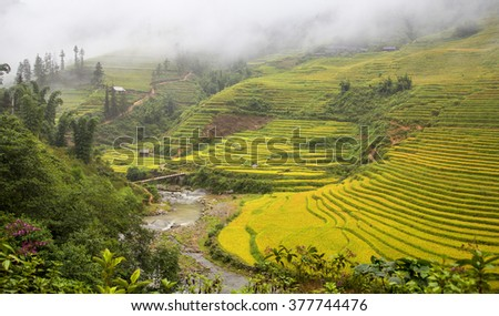 Rice fields on terraced in rainy season,, Lao Cai, Vietnam. Rice fields prepare for transplant at Northwest Vietnam