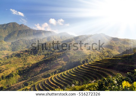 Rice fields on terraced mountain farm landscapes Lao Cai province, Sapa Viet Nam, Northwest Vietnam.