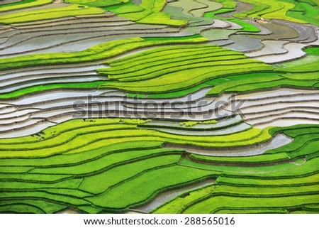 Rice fields on terraced of Mu Cang Chai, YenBai, Vietnam - stock photo