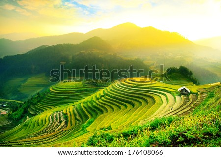 Rice fields on terraced of Mu Cang Chai, YenBai, Vietnam. Rice fields prepare the harvest at Northwest Vietnam.Vietnam landscapes. - stock photo