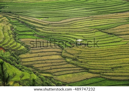 Rice fields on terraced of Mu Cang Chai, YenBai, Vietnam, Yenbai Province located in Northwest Vietnam.