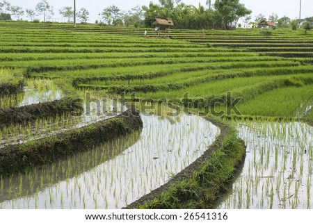 Rice fields on terraces with Irrigation system, Bali, Indonesia (4)