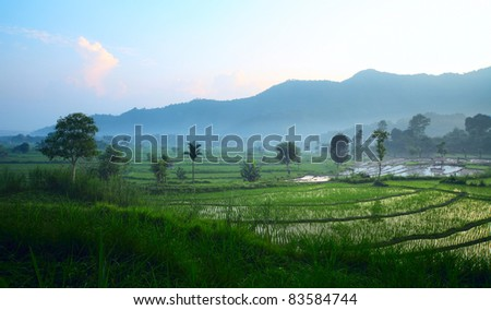 Rice fields with mountains on a horizon and morning fog in a valley - stock photo