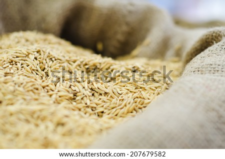 Rice grain in a fabric sack - stock photo
