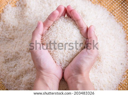 Rice grain in hands - stock photo
