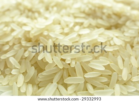 Rice grains close-up - stock photo