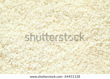 Rice grains (focus is on the center) - stock photo