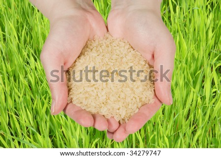 Rice in woman's hands against a green background - stock photo