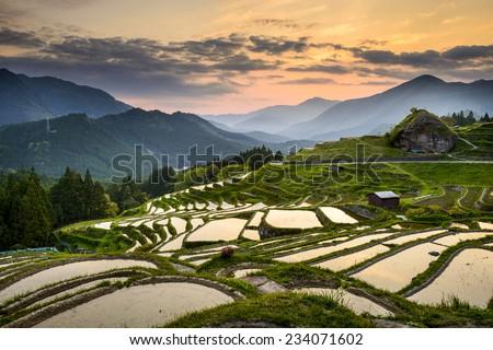 Rice Paddies in Kumano, Japan. - stock photo