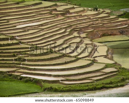 rice Paddy field in Madagascar - stock photo