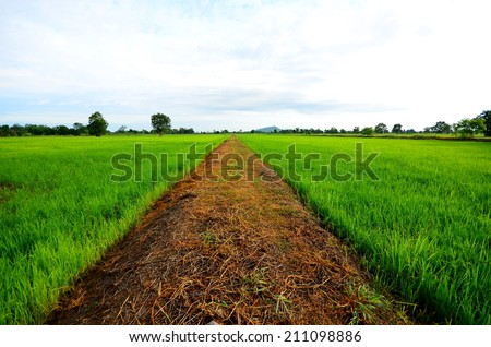 Rice Paddy Fields and Country Road - stock photo