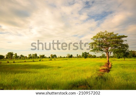 Rice Paddy Fields at Morning Sunrise - stock photo