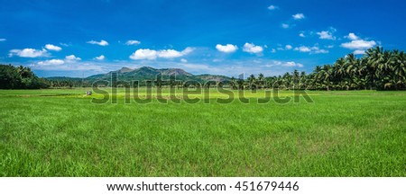 Rice plantations in Tamiland, India