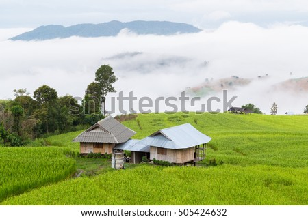 Rice terrace and sea of fog on the morning, Thailand.