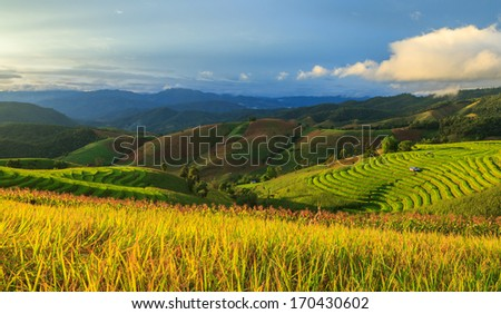 rice terrace in the sunset time