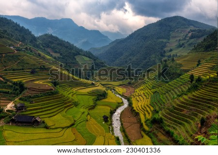 rice terrace, vietnam - stock photo