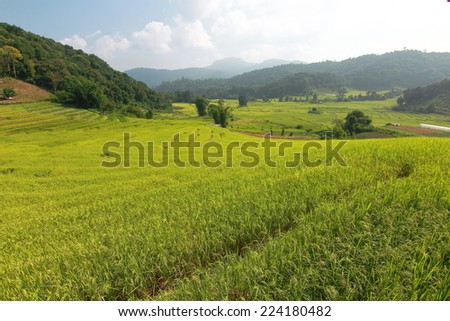 Rice Terraced Field in Chiangmai, Thailand
