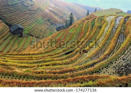 Rice Terraces China   - stock photo