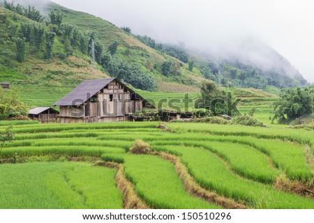 Rice Terraces in Cat Cat village Sapa Northern of Vietnam - stock photo