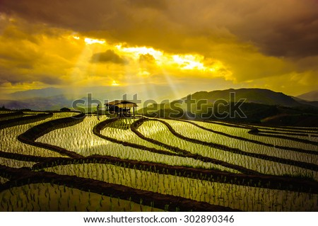 Rice Terraces in thailand. Rice fields on terraced in rainny season at Chiang Mai, Thailand