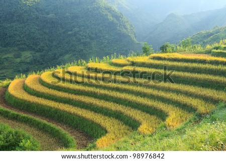 Rice terraces in the mountains in Sapa, Vietnam - stock photo