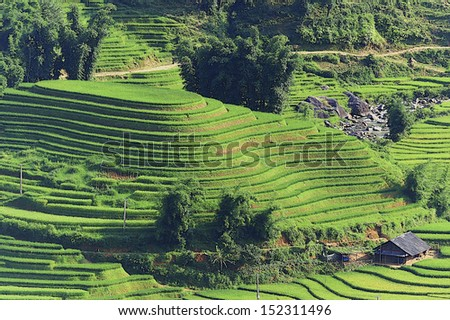 Rice terraces on the mountain.