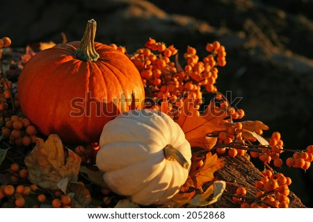 Rich colors of a fall harvest at sunset - stock photo