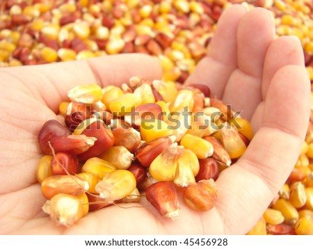 Rich Harvest - stock photo
