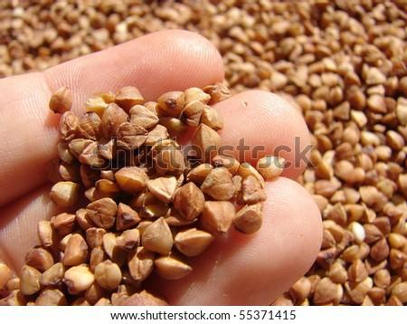 Rich Harvest - stock photo