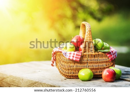 Rich organic apples in a sunlit basket outdoors. Autumn harvest of apples in a basket in a sunny garden. - stock photo