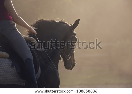 ride on horse - stock photo