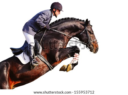Rider on bay horse in jumping show, isolated on white - stock photo
